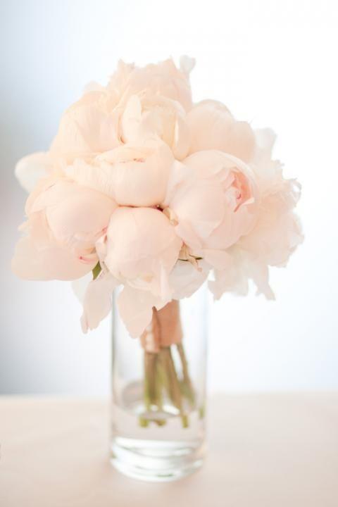 blush 4