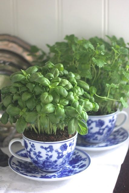 teacup herbs
